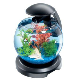 poissons d eau froide zolux 2 avis client 42 ? 00 ajouter au panier