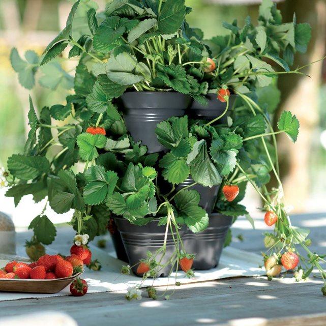 Jardinières empilables noir ø 25cm couleur unique Elho | La