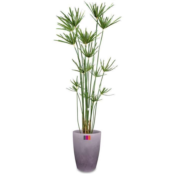 plante artificielle extérieur Achat / Vente fleur artificielle