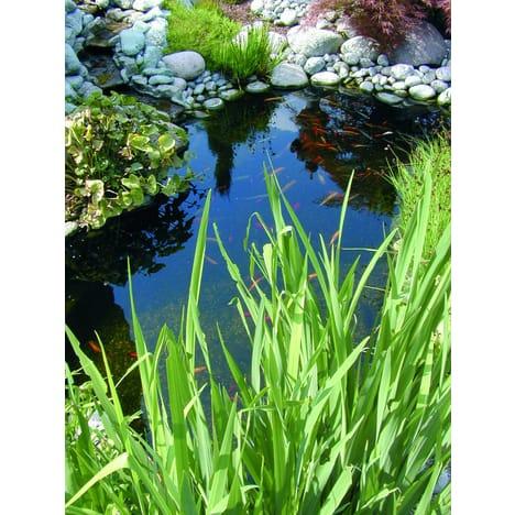 Bassin preforme - TopiWall