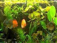 300 Plantes d'aquarium 20 Pots + 40 Bouquets aquatiques