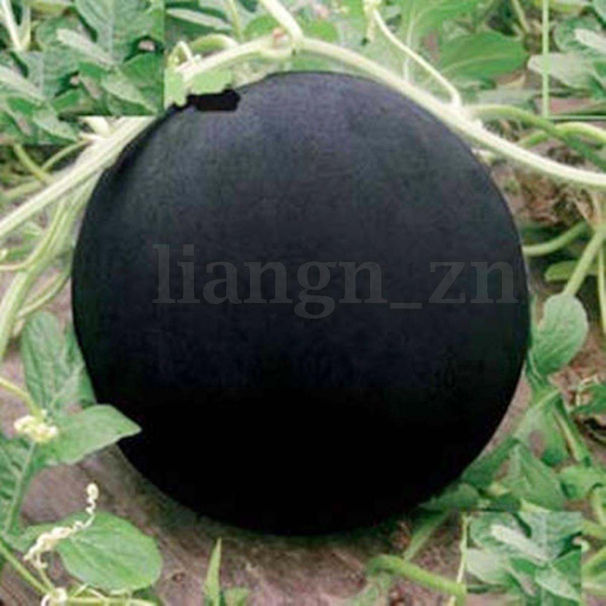10~100X Graines De Fruit Légume Semences Semer Fleur Plante Potager