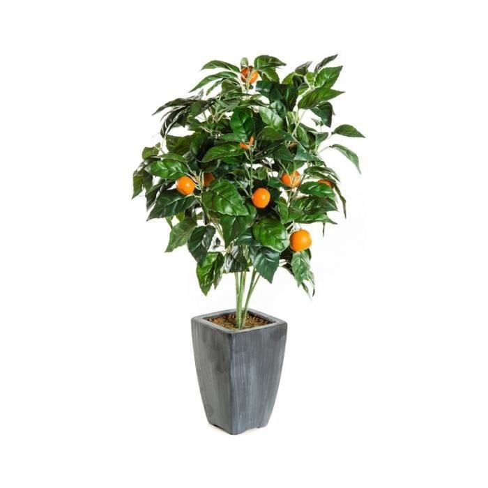 Arbre fruitier en pot topiwall - Arbre fruitier en pot ...