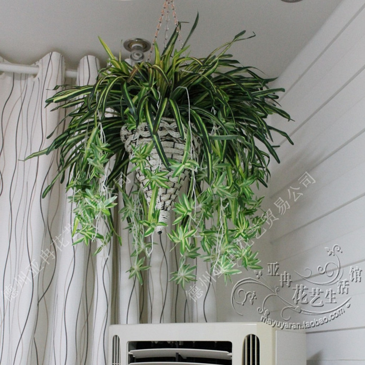 Plante d interieur topiwall for Plante interieur facile entretien