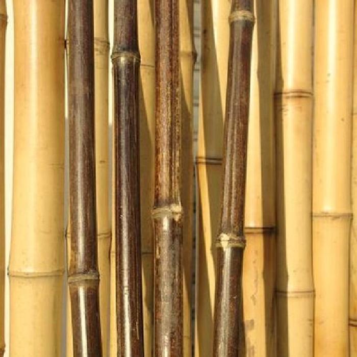 bambou multi usages couleur noire Achat / Vente tige bois bambou