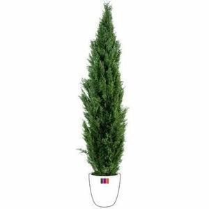 Plante verte d exterieur Achat / Vente Plante verte d exterieur pas