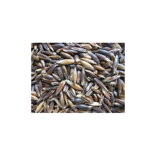 Nourriture Alimentation Grain Graine,Avoine Noire Pour