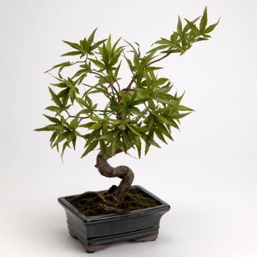 Amadeus Arbre artificiel Bonsaï erable du japon pot vert/marron