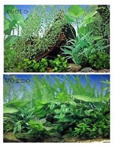poster fond d aquarium decors plantes double faces 80x 50 cm de