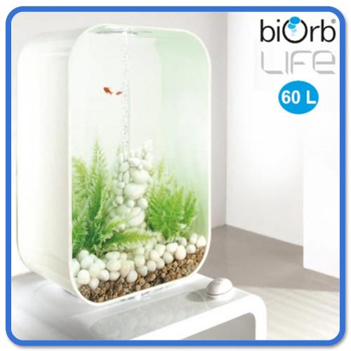 Life 60 litres avec winterfarn Design recette Nano Aquarium